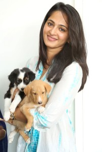 Anushka Photos At Blue Cross Pet Carnival Press Meet 6