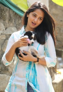 Anushka Photos At Blue Cross Pet Carnival Press Meet 7