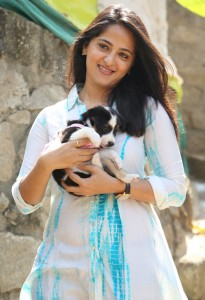 Anushka Photos At Blue Cross Pet Carnival Press Meet 8